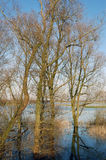 Bomen in overstroomd land Stock Fotografie