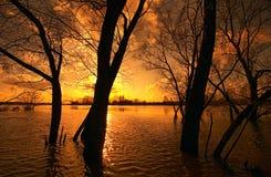 Bomen in overstroomde rivier Stock Foto's