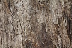 Bomen, overzeese shells Royalty-vrije Stock Foto