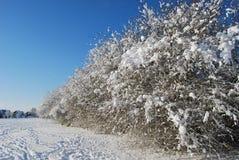 Bomen in park dat in de wintersneeuw wordt behandeld Stock Afbeeldingen