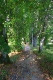 Bomen in park twee Royalty-vrije Stock Foto