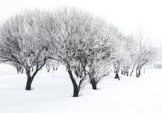 Bomen in rijp Royalty-vrije Stock Afbeeldingen