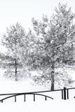 Bomen in rijp Stock Fotografie