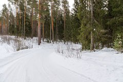 Bomen in rijplandweg Stock Foto