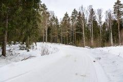 Bomen in rijplandweg Royalty-vrije Stock Foto