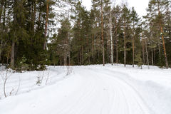 Bomen in rijplandweg Royalty-vrije Stock Foto's