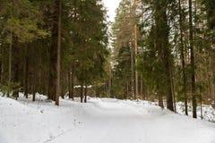 Bomen in rijplandweg Stock Afbeeldingen