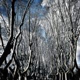 Bomen in Rome Gianicolo royalty-vrije stock foto