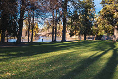 Bomen, schaduwen en water in stedelijk park stock afbeeldingen