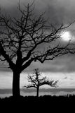 Bomen in Schemering Stock Foto's