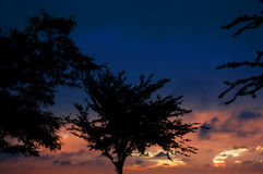 Bomen in Silhouet onder de Dramatische Hemel van de Zonsondergang Royalty-vrije Stock Foto's
