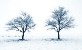 Bomen in sneeuw stock foto