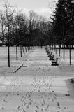 Bomen in sneeuw royalty-vrije stock afbeeldingen