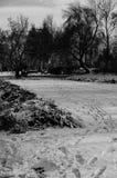 Bomen in sneeuw stock afbeeldingen