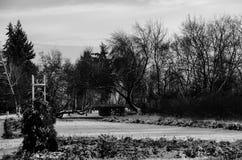 Bomen in sneeuw stock afbeelding