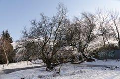 Bomen in sneeuw stock foto's