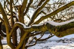 Bomen in sneeuw royalty-vrije stock foto