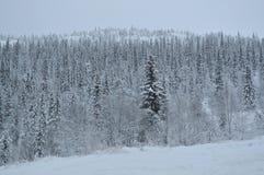 Bomen in sneeuw in de winterbos stock foto's
