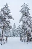 Bomen in sneeuw dichtbij Sirkka in Lapland, Finland worden behandeld dat stock afbeelding
