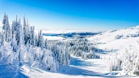 Bomen in sneeuw en ijs volledig worden behandeld dat royalty-vrije stock foto