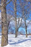 Bomen in sneeuwlandschap in middagzon stock afbeelding