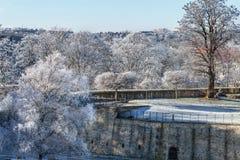 Bomen sneeuwvesting Stock Fotografie
