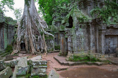 Bomen in Ta Prohm, Angkor Wat royalty-vrije stock afbeelding