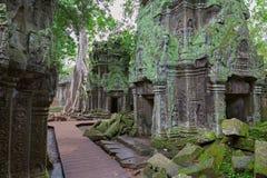 Bomen in Ta Prohm, Angkor Wat stock foto's