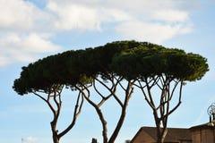 Bomen in Trajan ` s Forum Foro Di Traiano Royalty-vrije Stock Fotografie