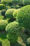 Bomen in tuin Royalty-vrije Stock Afbeelding