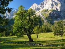 Bomen und moutains Royalty-vrije Stock Afbeeldingen