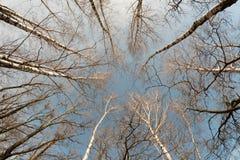 Bomen van bodem stock foto's