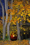 Bomen van de de herfst de kleurrijke nacht Stock Fotografie