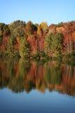 Bomen van de herfst dachten in blauw meer in Daling na Stock Foto