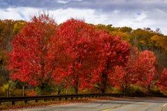 Bomen van de kant van de weg de rode esdoorn Royalty-vrije Stock Fotografie