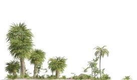Bomen van de secundaire die era op witte 3D illustratie wordt ge?soleerd als achtergrond vector illustratie