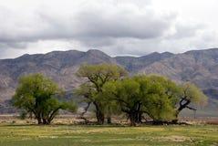 Bomen van de Siërra Stock Foto