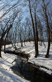 Bomen van de winter Royalty-vrije Stock Foto