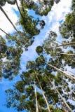 Bomen van een mooie berg stock afbeeldingen