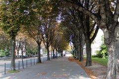 Bomen van een park van Parijs Stock Afbeeldingen