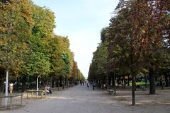 Bomen van een park van Parijs Stock Afbeelding