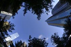 Bomen van het de Wolkenkrabbers de Stedelijke Park van stadsgebouwen royalty-vrije stock afbeelding