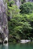 Bomen van het kasteel de piek groene water Stock Foto's