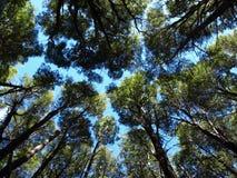 Bomen van onderaan Royalty-vrije Stock Fotografie