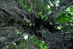 Bomen van onderaan, mening naar omhoog in een bos Royalty-vrije Stock Afbeelding
