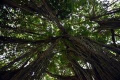 Bomen van onderaan, mening naar omhoog in een tropisch bos royalty-vrije stock afbeeldingen