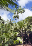 Bomen van tropisch klimaat mauritius stock foto