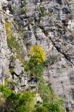 Bomen van Yangtze de Kleine Drie Kloven in Daling stock foto