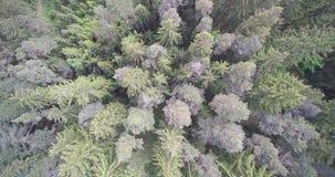 Bomen vanaf bovenkant Stock Foto's