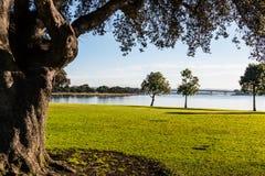 Bomen in Ventura Cove Park in San Diego royalty-vrije stock foto's